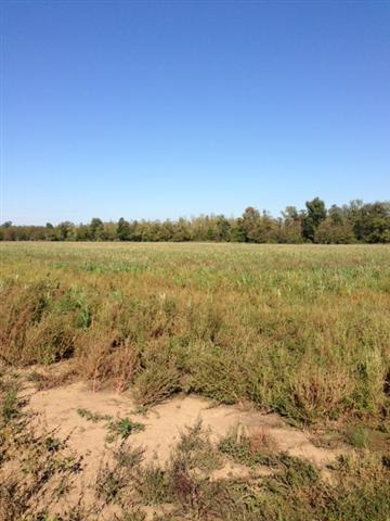 243 acres in Wickliffe, Kentucky