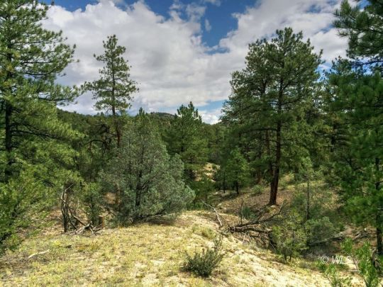 primary photo for 319 Ridge Rd, Cotopaxi, CO 81223, US