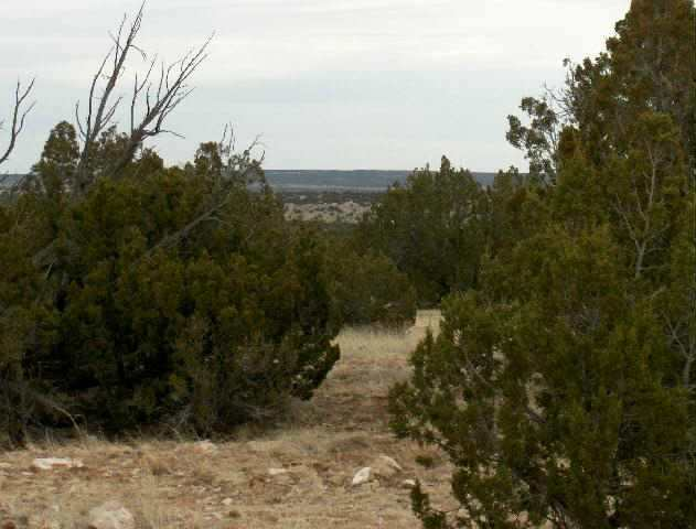 Image of  for Sale near Overgaard, Arizona, in Navajo County: 38.12 acres