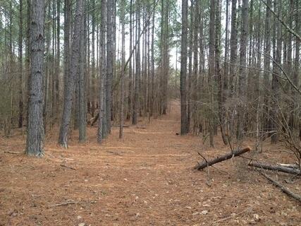 234 acres Abbeville, SC
