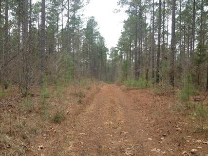 155 acres Abbeville, SC