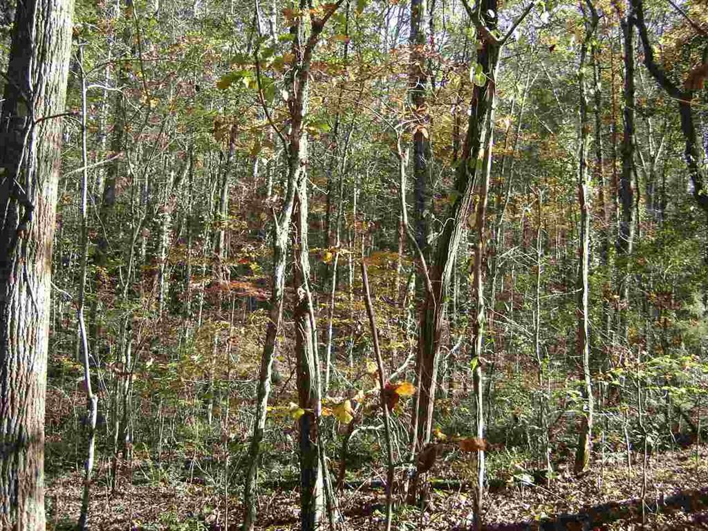 330 Falcons Nest Road, Walhalla, South Carolina