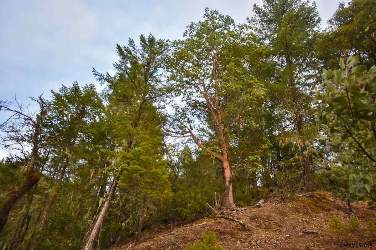 12500 Redwood (TL #2000) Hwy Wilderville, OR 97543