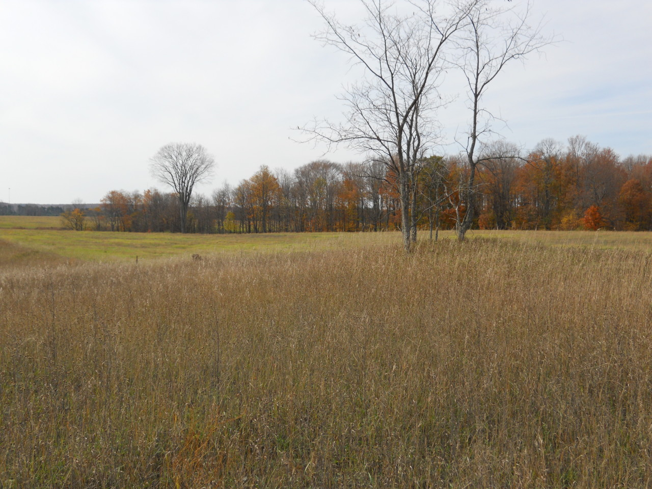 primary photo for Parmater Road 80 ACRES, Elmira, MI 49730, US