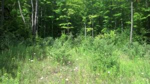 3.7 acres by Comins, Michigan for sale