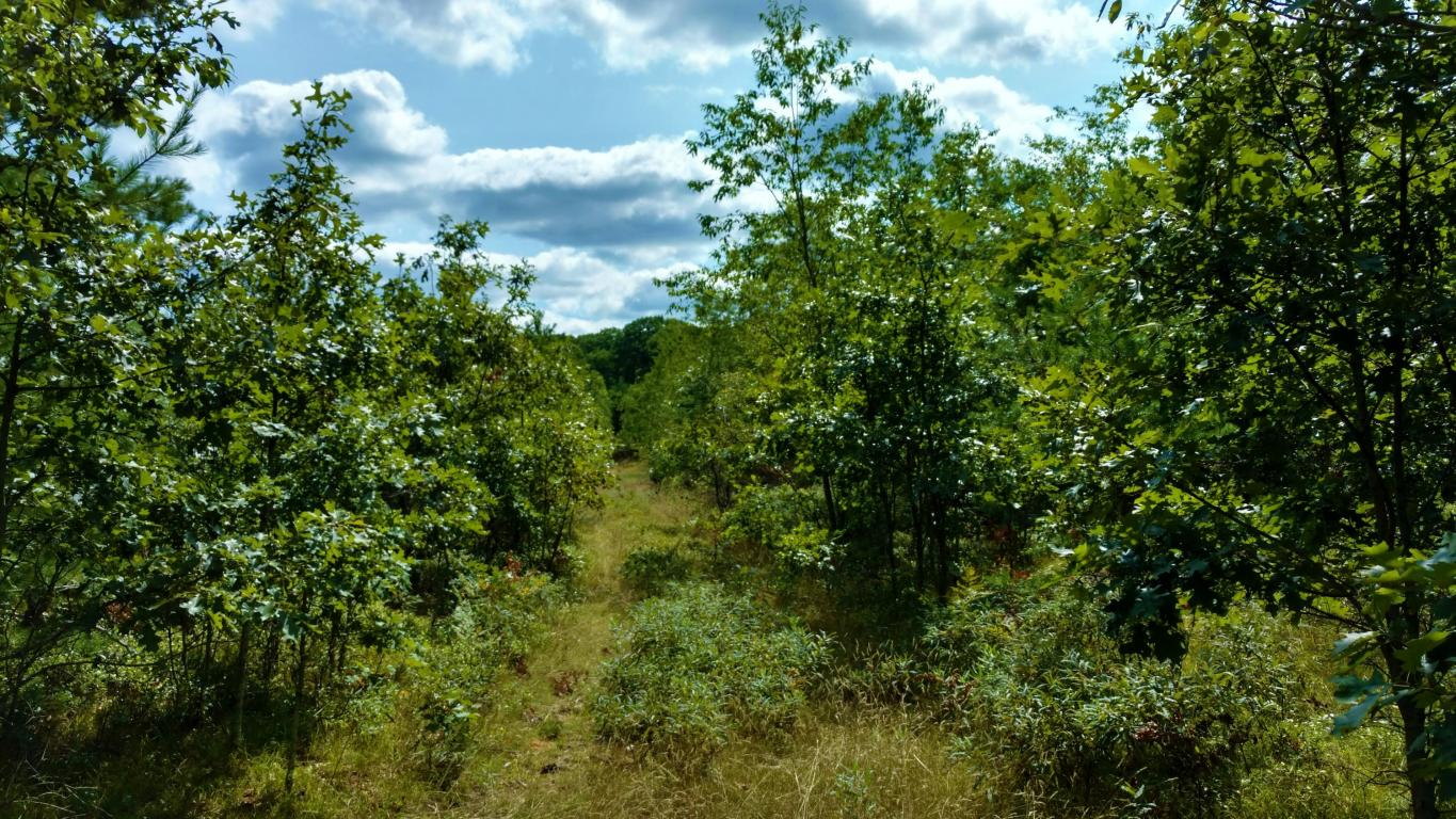 Image of Acreage for Sale near Saint Helen, Michigan, in Roscommon County: 40 acres
