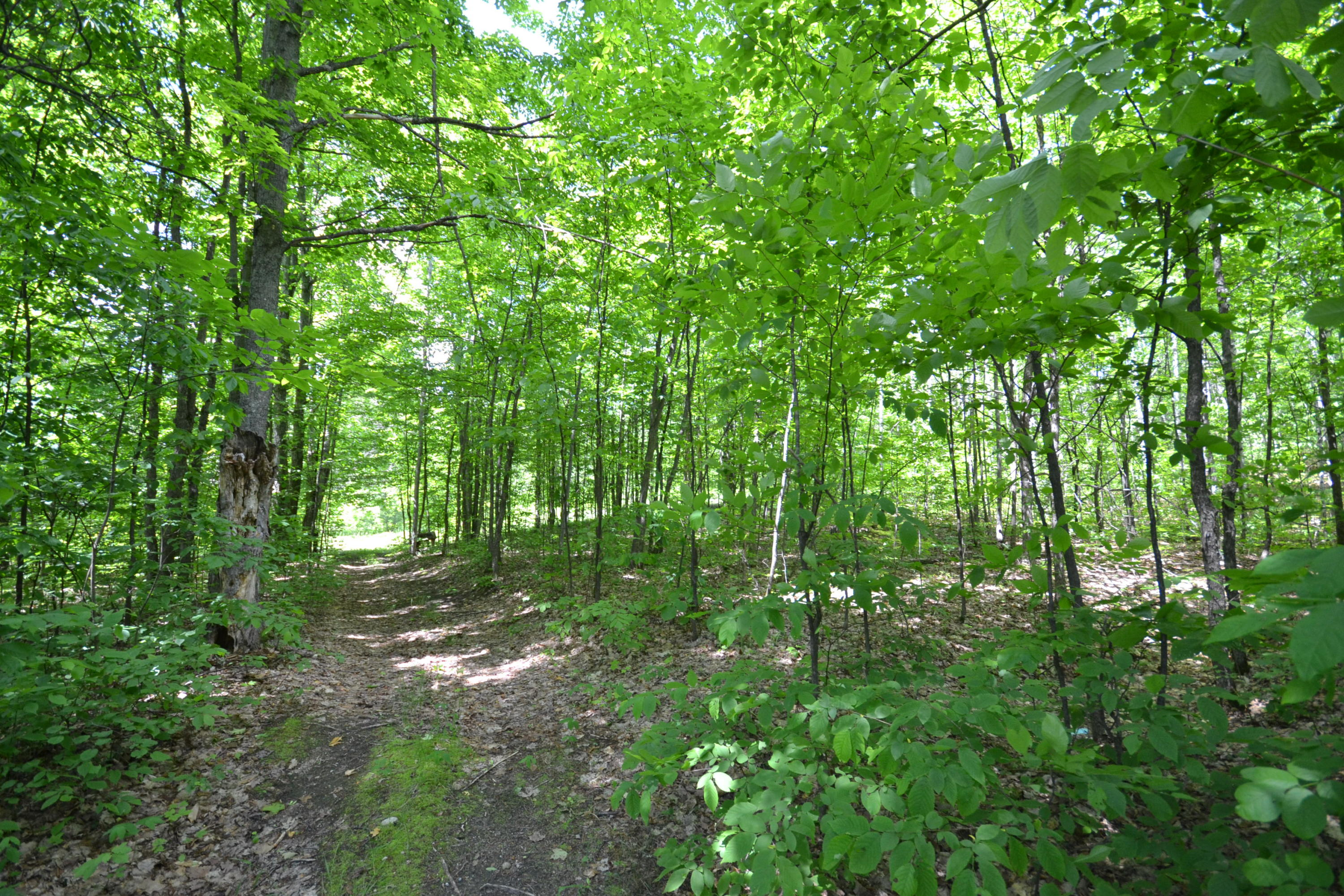 10099 Camp 8 Road - photo 2