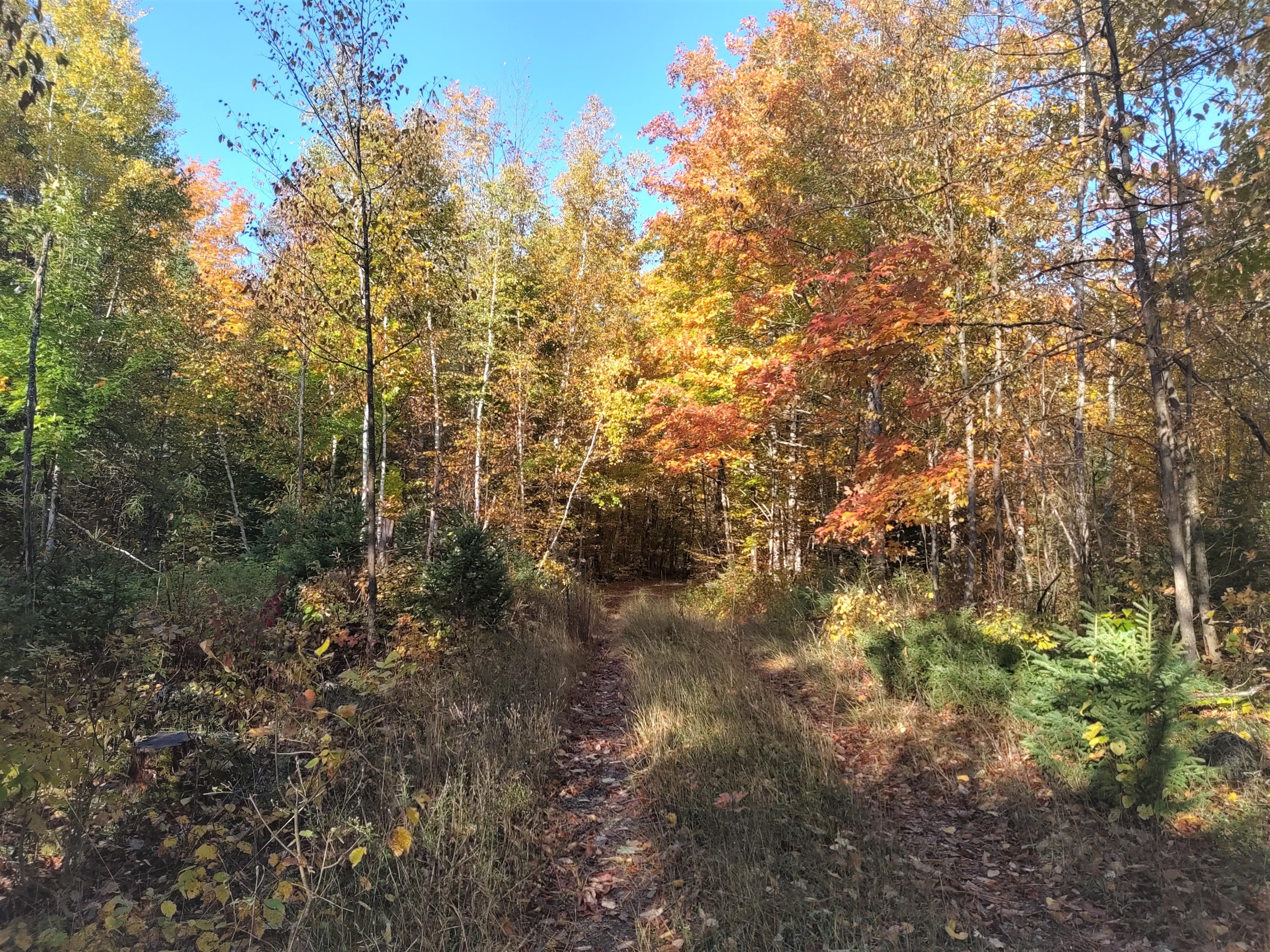 NHN Haken Road, one of homes for sale in Alpena